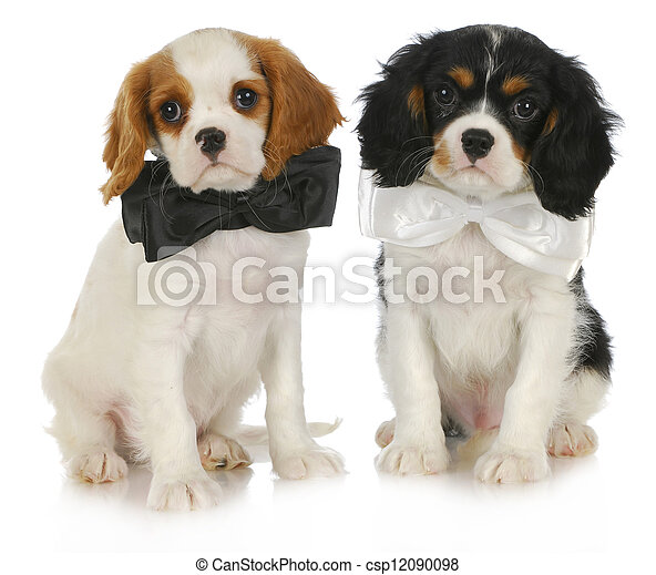 two cute puppies - csp12090098