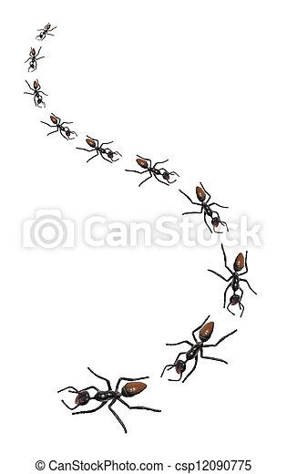 Toy Ants - csp12090775