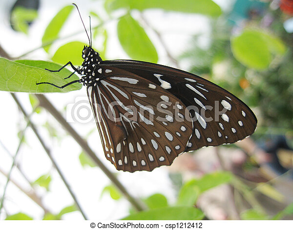 photo de papillon papier cerf volant ou riz papier. Black Bedroom Furniture Sets. Home Design Ideas