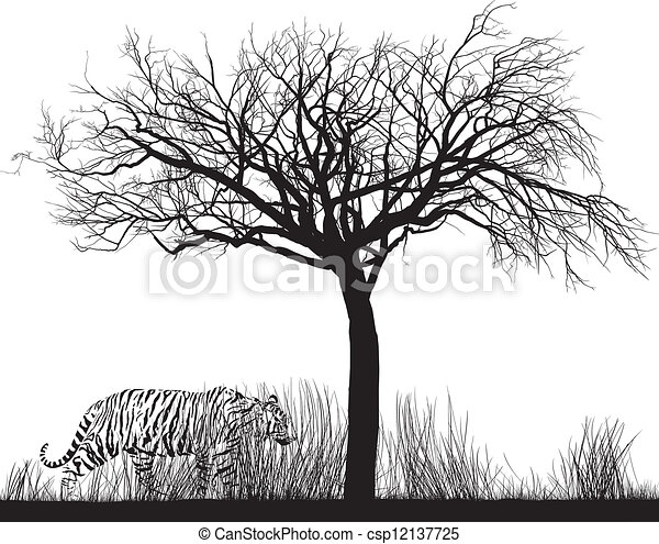 Tall Trees Drawing Tiger in Tall Grass Vector