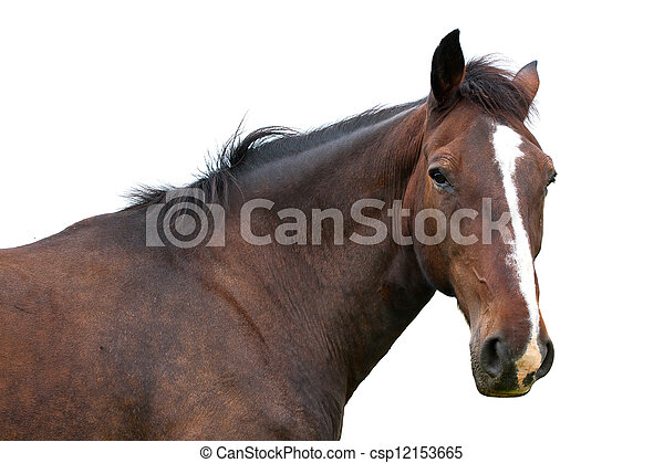 Horse head isolated - csp12153665