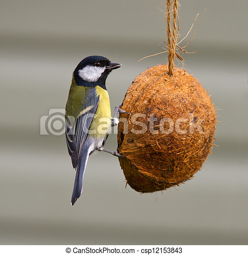 Great Tit - csp12153843