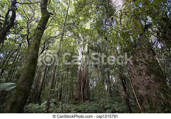 New Zealand - Kauri Forrest - csp1215791