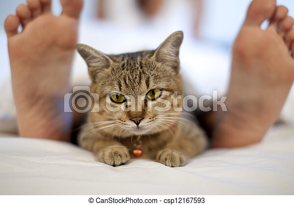 cat in bed with woman feet - csp12167593