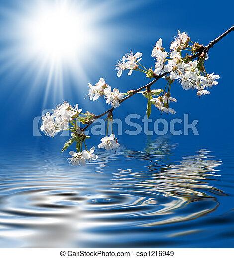 Blooming cherry - csp1216949
