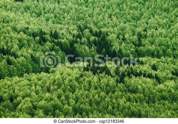Summer forest - csp12183346