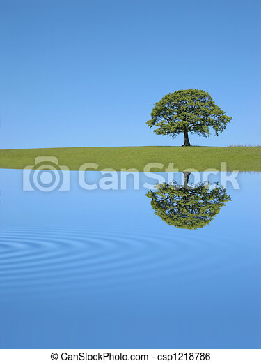 Oak Tree Reflection - csp1218786