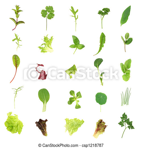 Salad Lettuce and Herb Leaves - csp1218787