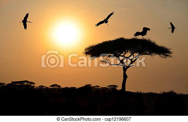 Birds Flying Above Acacia Tree At Sunset 12196607