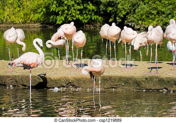 Flamingó, madarak - csp1219889