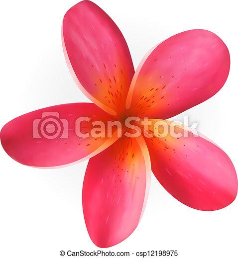 Plumeria Flower Line Drawing Pink plumeria flower isolated