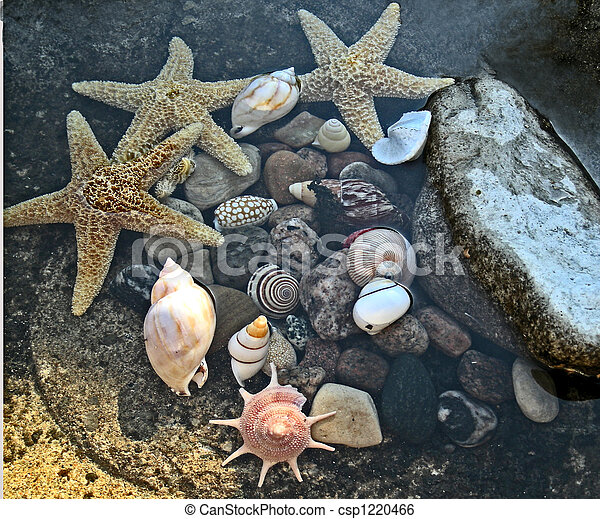 stock image of sea shells underwater sea shells variety under the sea clip art black and white set under the sea clip art black white