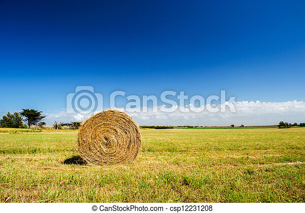 Bale hay in agriculture landscape - csp12231208