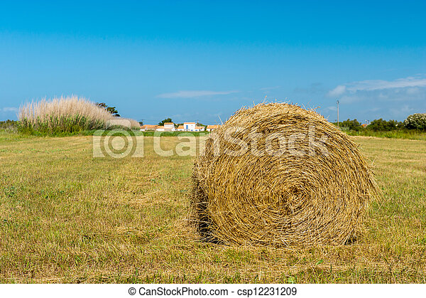 Bale hay in agriculture landscape - csp12231209