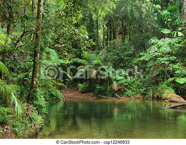 Travelling the Daintree National Park - csp12248833
