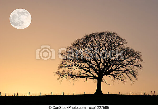 Winter Oak and Full Moon - csp1227585