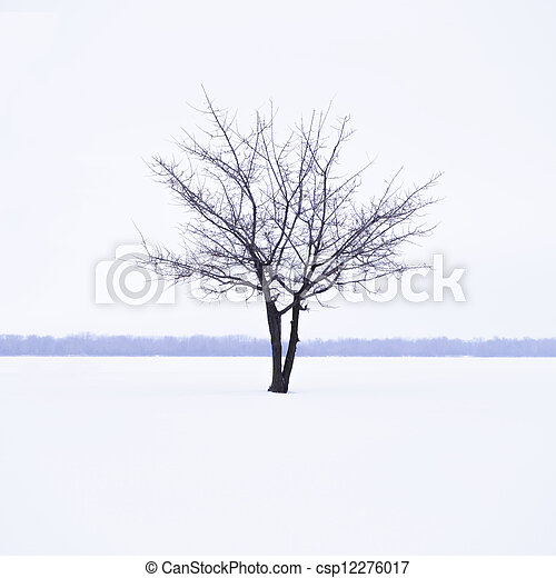 Winter landscape with lonely tree in mist time - csp12276017