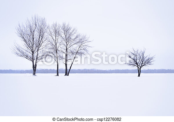 Winter landscape with lonely trees in mist time - csp12276082