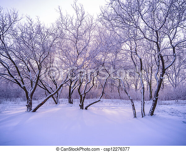 Winter forest in snow with frost, sunlight through the trees - csp12276377