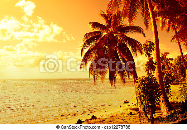 Tropical coconut palm tree sunset - csp12278788