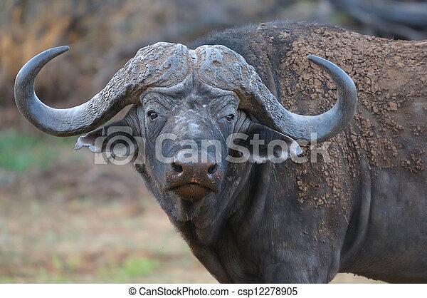 斑馬, 國家, 公園, 納米比亞, 大象,  ETOSHA - csp12278905