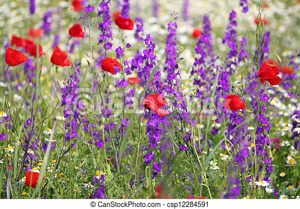 spring meadow with wild flowers - csp12284591