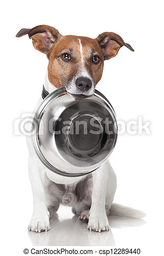 hungry dog food bowl - csp12289440