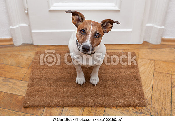 dog welcome home - csp12289557