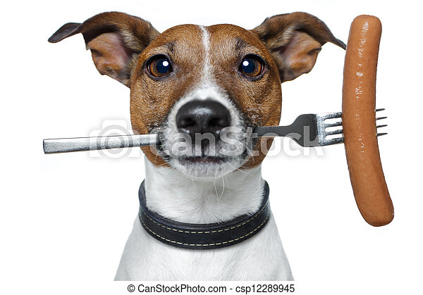 hungry dog with a sausage on the fork - csp12289945