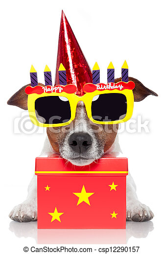 birthday dog  - csp12290157