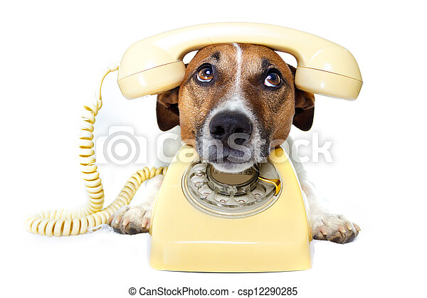 dog phone call - csp12290285