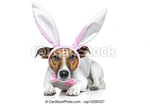 bunny dog easter - csp12290337