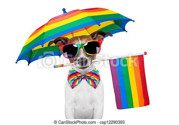 gay dog - csp12290393