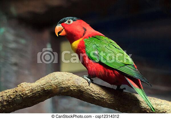 Beautiful red parrot bird close up