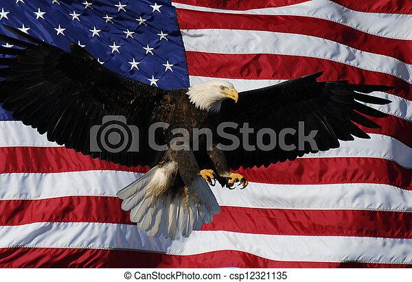 Bald Eagle landing American Flag - csp12321135