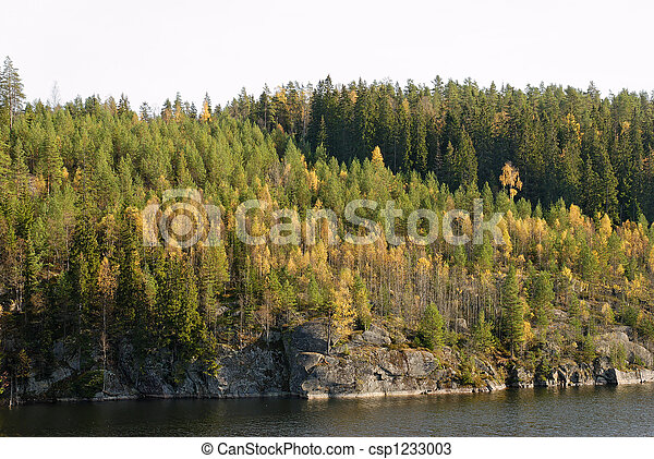 Autumn Forest  - csp1233003