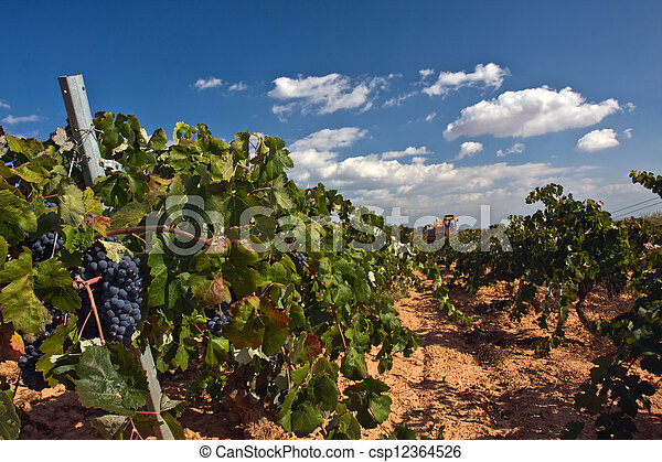 Automatic combine-harvester gathering grape - csp12364526