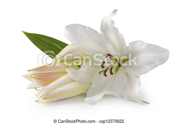 White lily flowers - csp12370622