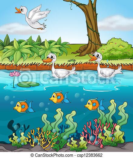 algas marinhas,algas marinhas onde comprar,algas marinhas capsulas,folha de alga,capsulas de algas marinhas,algas marinhas para que serve,algas multicelulares,algas vermelhas,algas castanhas,oxigênio,mar,rio,lagoa,ambiente aquático,animais marinhos,nutrientes,apetite sexual,minerais,cálcio,magnésio,iodo,ferro,proteínas,vitaminas B