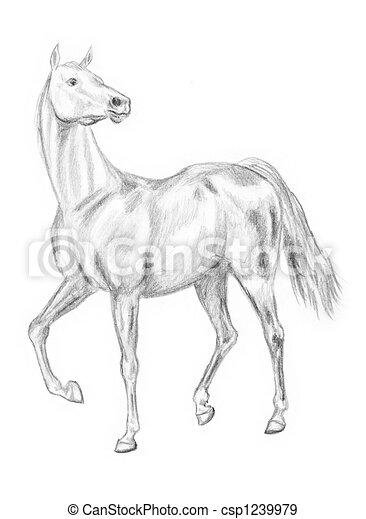 Archivio illustrazioni di camminare cavallo disegno for Disegni di cavalli a matita