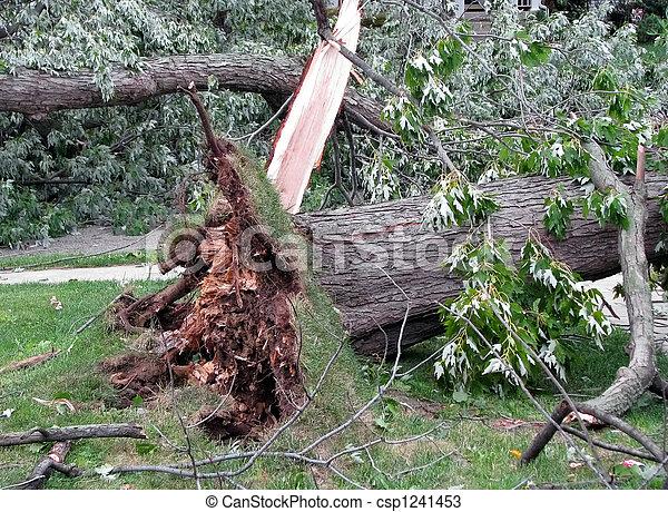 storm damage - csp1241453