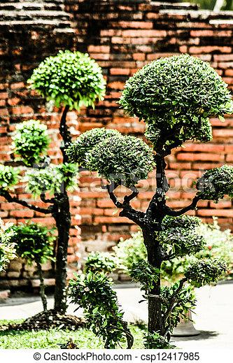 stock foto sch ne kahl zypresse bonsai baum wald. Black Bedroom Furniture Sets. Home Design Ideas