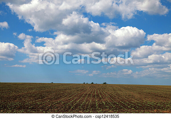 Agriculture field and blue sky - csp12418535
