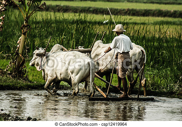 Burma. Farmer on his Rice Field  - csp12419964