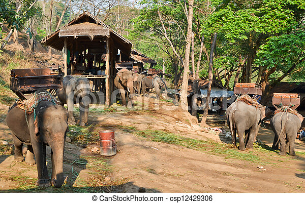 asia elephant camp in vilage of northern thailand - csp12429306