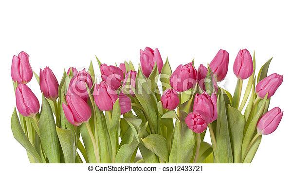 Tulip flowers - csp12433721