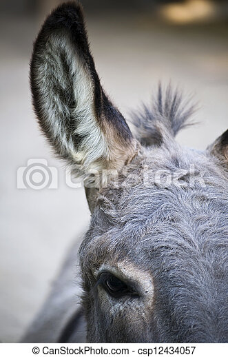 Part of a Donkey Head - csp12434057