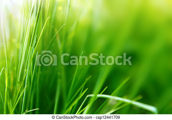 Spring or summer background with green grass  - csp12441709
