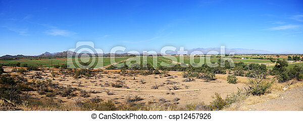Agriculture in the desert - csp12457926