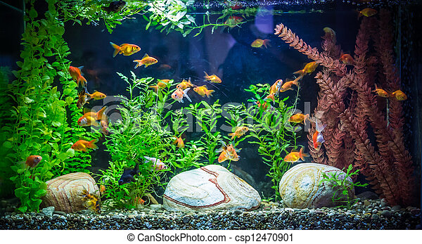 stock fotografie von fische s wasser ttropical aquarium a gr n sch ne csp12470901. Black Bedroom Furniture Sets. Home Design Ideas